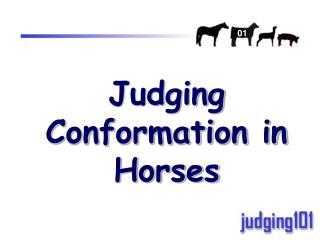 Judging Conformation in Horses