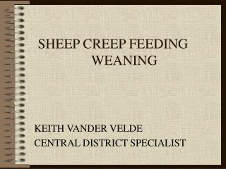 SHEEP CREEP FEEDING  WEANING