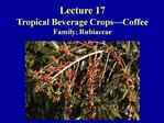 Lecture 17 Tropical Beverage Crops Coffee Family: Rubiaceae