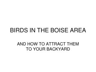 BIRDS IN THE BOISE AREA