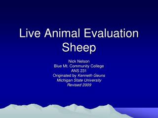 Live Animal Evaluation Sheep