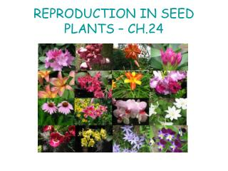 REPRODUCTION IN SEED PLANTS   CH.24