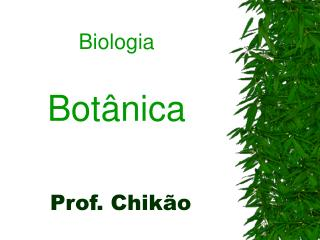 Prof. Chik o
