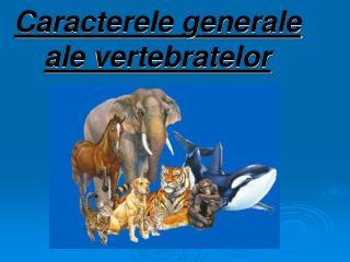 Caracterele generale ale vertebratelor