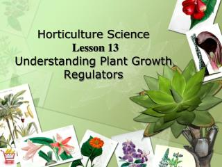 Horticulture Science  Lesson 13 Understanding Plant Growth Regulators