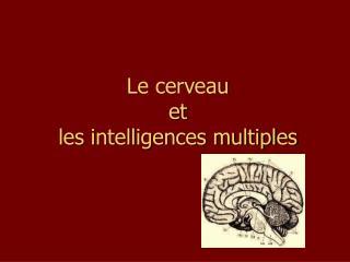 Le cerveau et les intelligences multiples