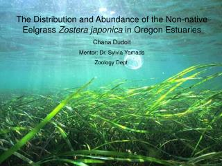 The Distribution and Abundance of the Non-native Eelgrass Zostera japonica in Oregon Estuaries  Chana Dudoit Mentor: Dr.