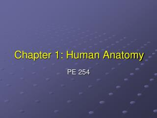 Chapter 1: Human Anatomy