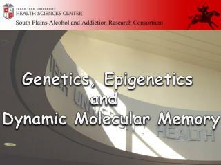 Genetics, Epigenetics  and   Dynamic Molecular Memory