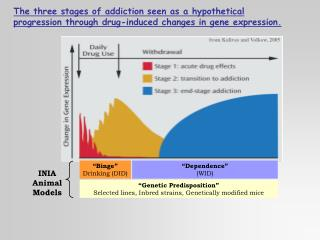 The three stages of addiction seen as a hypothetical progression through drug-induced changes in gene expression.