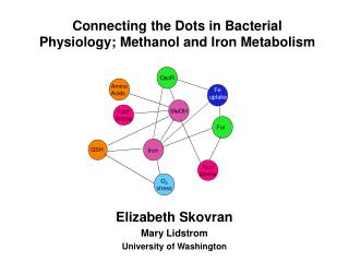 Connecting the Dots in Bacterial Physiology; Methanol and Iron Metabolism