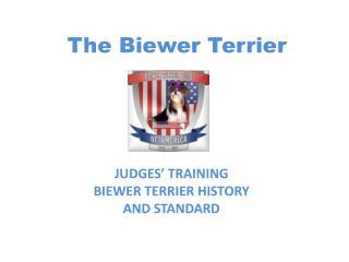 The Biewer Terrier