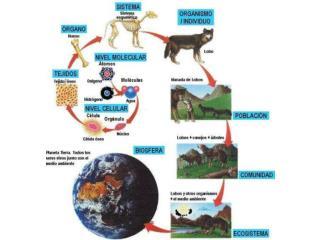 Ecosistema:   sistema natural formado por un conjunto de organismos vivos biocenosis y el medio f sico donde se relacion