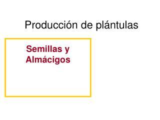 Producci n de pl ntulas