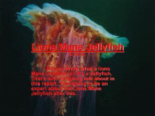 Lions Mane Jellyfish BY: BRETT