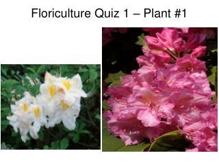 Floriculture Quiz 1   Plant 1