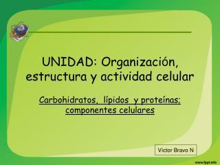 UNIDAD: Organizaci n, estructura y actividad celular