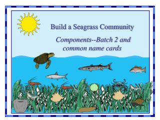 Build a Seagrass Community  Components--Batch 2 and common name cards
