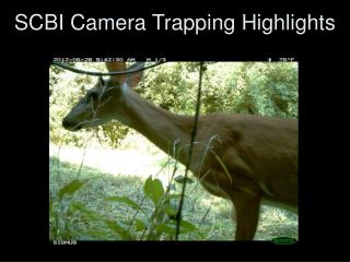 SCBI Camera Trapping Highlights