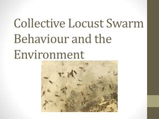 Collective Locust Swarm Behaviour and the Environment