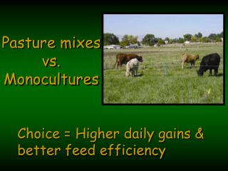 Choice  Higher daily gains   better feed efficiency