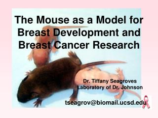 The Mouse as a Model for Breast Development and  Breast Cancer Research