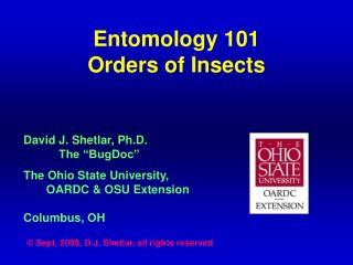 Entomology 101 Orders of Insects