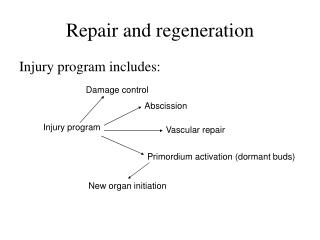 Repair and regeneration