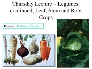Thursday Lecture   Legumes, continued; Leaf, Stem and Root Crops