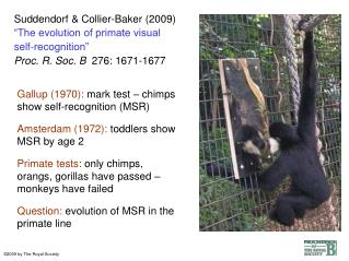 Suddendorf  Collier-Baker 2009  The evolution of primate visual self-recognition   Proc. R. Soc. B  276: 1671-1677