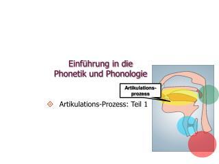 Einf hrung in die  Phonetik und Phonologie