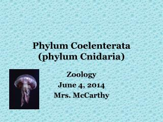 Phylum Coelenterata phylum Cnidaria