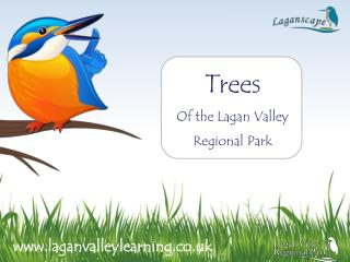 Trees Of the Lagan Valley Regional Park