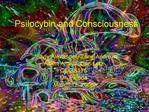 Psilocybin and Consciousness