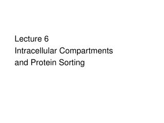 Lecture 6   Intracellular Compartments  and Protein Sorting