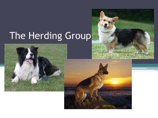 The Herding Group