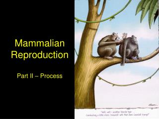 Mammalian Reproduction Part II – Process