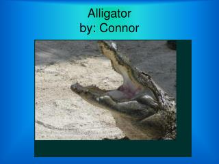 Alligator by: Connor