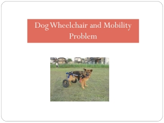 Dog Wheelchair and Mobility Problem