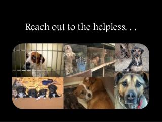 Animal Abuse PSA