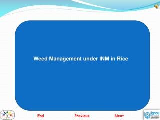Weed Management under INM in Rice