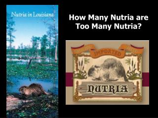 How Many Nutria are  Too Many Nutria?