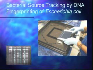 Bacterial Source Tracking by DNA Fingerprinting of  Escherichia coli