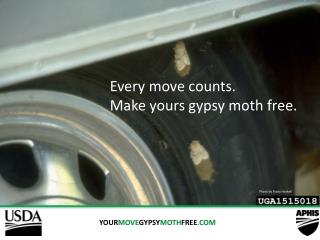 YOUR MOVE GYPSY MOTH FREE .COM