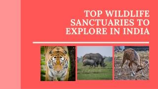 Top Wildlife Sanctuaries To Explore In India