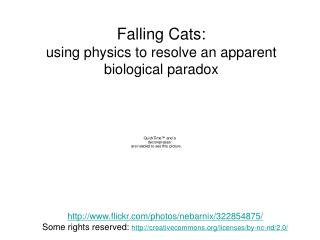 Falling Cats: using physics to resolve an apparent biological paradox