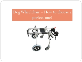 Dog Wheelchair – How to choose a perfect one