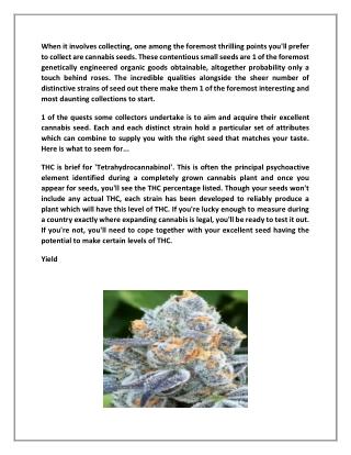 Cannabis Seeds | Theseedfair.com