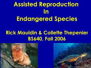 Assisted Reproduction  In  Endangered Species Rick Mauldin & Collette Thepenier BS640, Fall 2006