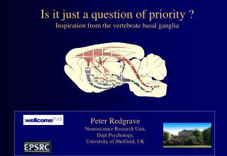 Is it just a question of priority ? Inspiration from the vertebrate basal ganglia